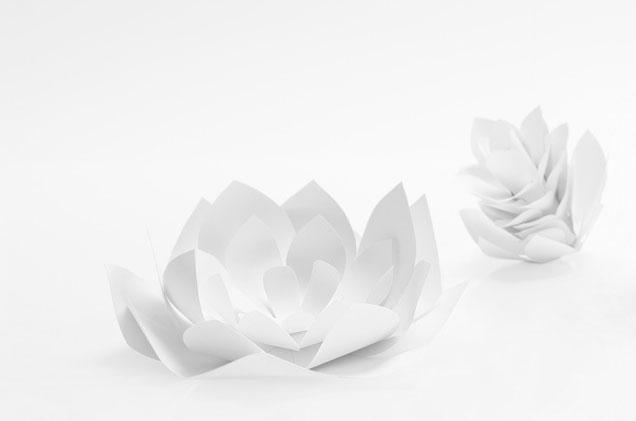 fleurs-choux-artichaut