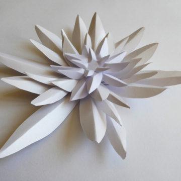 Fleur Edelweiss paper art Laure Devenelle