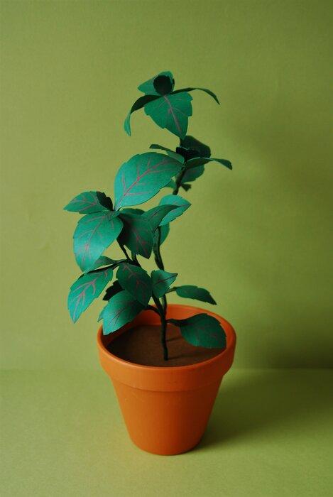 Basilic-green-paper-plant-artiste-2019-laure-devenelle