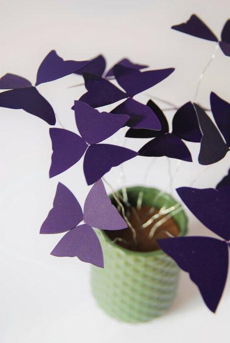Oxalys-Paper-plant-zoom-2018-laure-devenelle