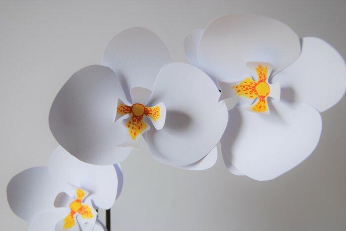 Orchidee-plant-paper-flower-papier-decoupe-2018-artiste-laure-devenelle