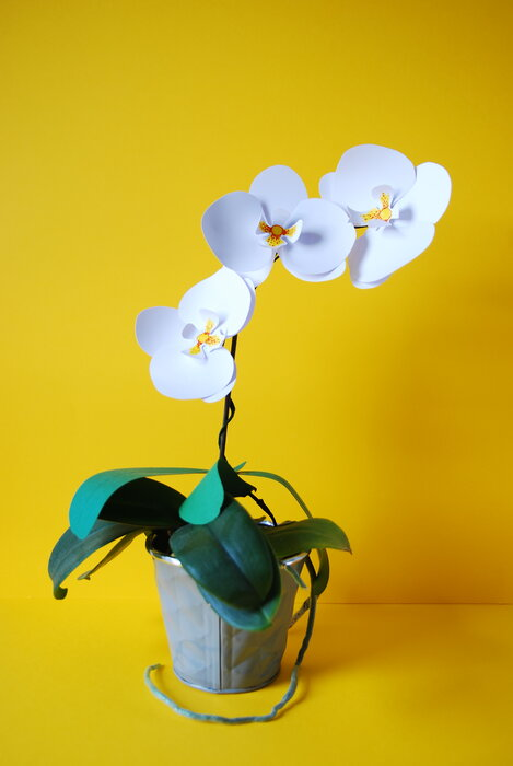 Orchid-plant-paper-flower-papier-decoupe-white-yellow-2018-artiste-laure-devenelle